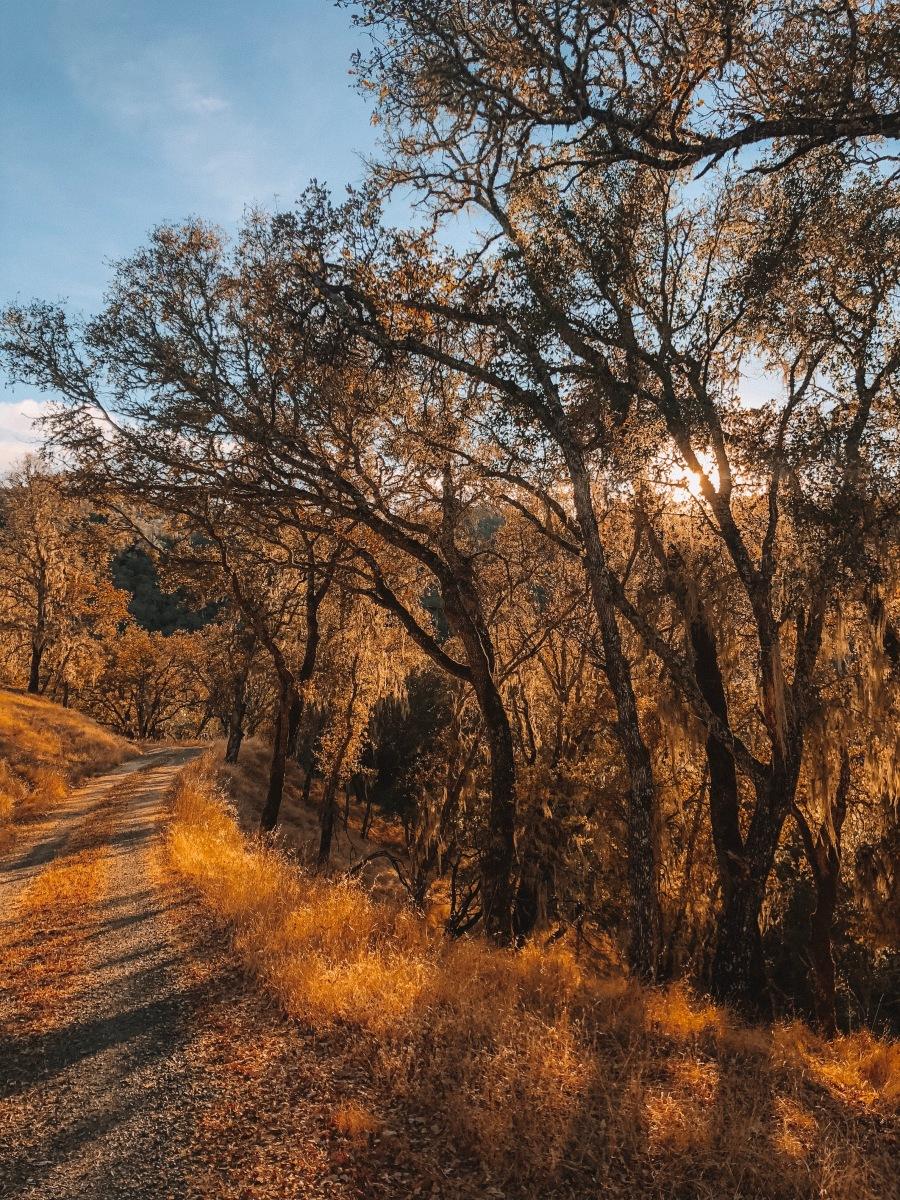 Treat Yo' Self California Resorts – Living Life Via the Van